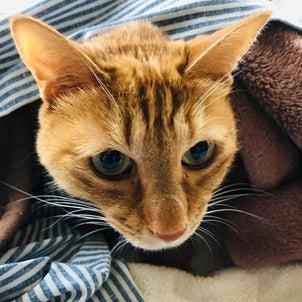 ネコが教えてくれる秋とインドへの想いの画像