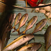 海水温の変化と魚の変化