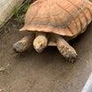 埼玉県の東松山動物園