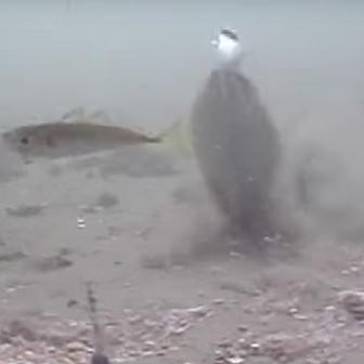 老子の言葉「魚を与えるな。釣り方を教えよ」だが、いや、まず魚を与えよう