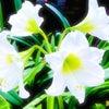 【星暦9/27〜12/2 水星が蠍座へ:オンラインの時代に求められる能力とは】の画像
