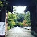 【2020京都紅葉最新】うっすら色づき始める紅葉名所をパトロール☆永観堂