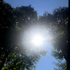 牡羊座満月「おおきな栗の木の下で」の画像