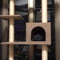 キャットタワーの穴