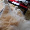 今日は招き猫の日  すり寄ってきたバロン