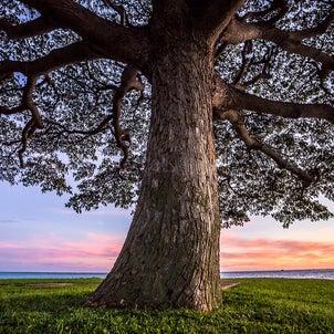 大きな木の画像