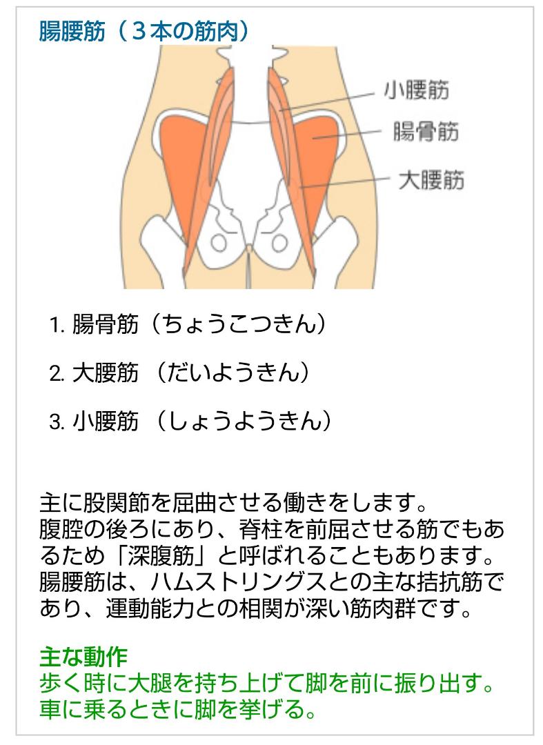 筋肉 股関節 屈曲