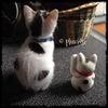 今日は(まだ)招き猫の日の画像