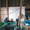 牛舎リノベーションプロジェクトの画像