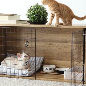 【連載最終回】出張カラボ部!カラーボックスで作る子猫用簡易ケージの画像