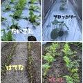 shishimisaのブログ