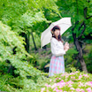 バイオリン天使・やまもといずみちゃん304 『薔薇と紫陽花4』