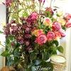生花 体験レッスン 再開の画像