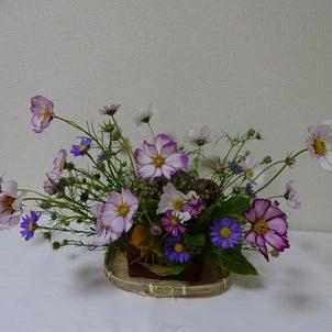 10月の花、秋桜を使って。の画像