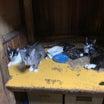 【閲覧注意】悲しい画像と虫の嫌いな方は閲覧ご遠慮ください。神奈川多頭飼育崩壊144頭の現実