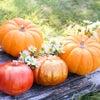 秋の養生の画像