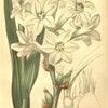 TUBEROSE NOIR(ZARA EMOTIOMS)香水レビュー 夜に香る花とは・・の画像