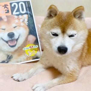 **「柴犬ライフ 秋号2020〜柴犬の正論」**の画像