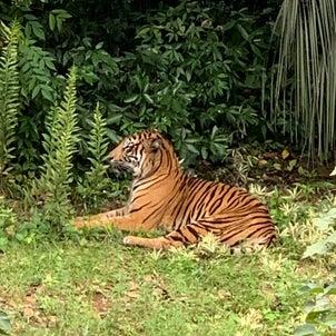 よこはま動物園ズーラシアの画像