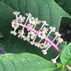 花から実が出来、種になるの画像