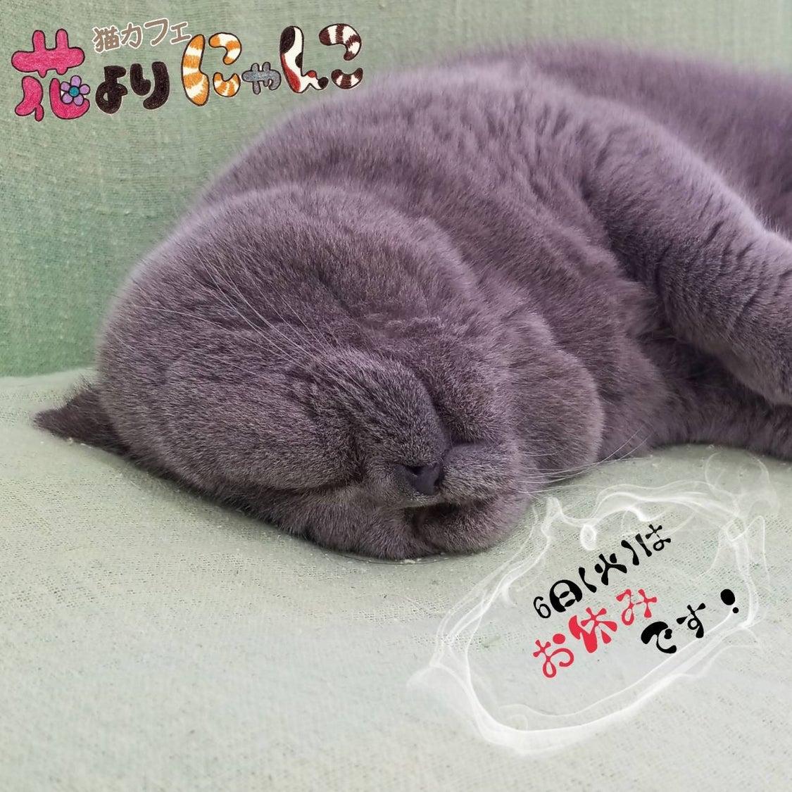 10月6日は子猫のお迎えの記事より