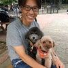 小夏と陽毬(ひまり)、駒沢公園のドッグランに行ってきました!の画像