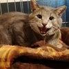 王子様になった野良猫 の画像