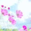 【星暦〜今週は、未来を信じて、現実の変化を愉しんで〜】の画像