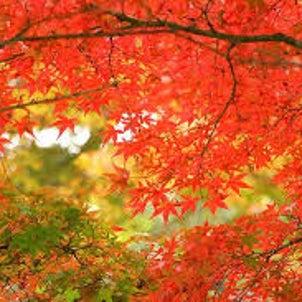 過ごしやすい秋だけが来てますけど・・・の画像