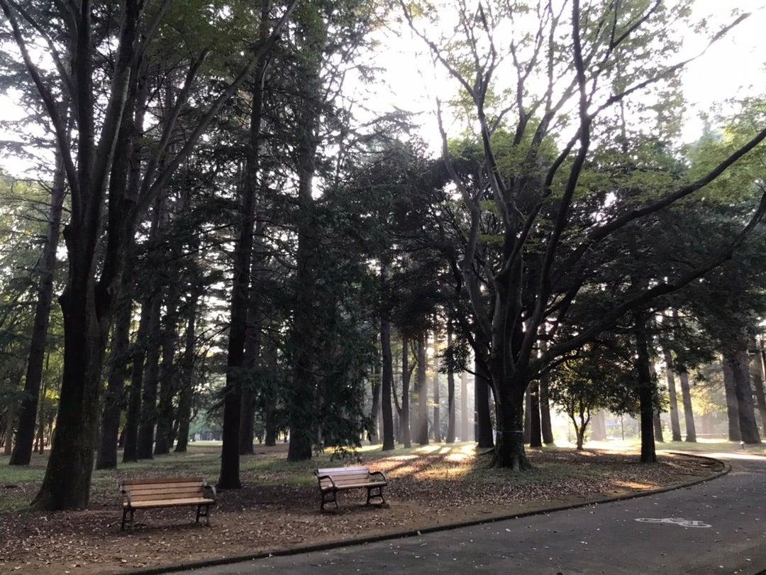 代々木公園で神々しい光の中リフレッシュ!