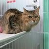 札幌動物管理センターから負傷猫2匹レスキューの画像
