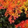 【お知らせ】11月のご予約開始は10月9日(金)19:30~ですの画像