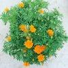 今日の花の画像