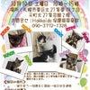 明日の譲渡会の参加猫たちの画像