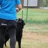 2020/10/11(日)絵日記 犬ミーティングの画像