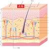 さて今回は紫外線・メラニン・シミのお話しです。の画像