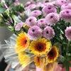 「ハロウイン花育」~お花をいっぱいさそう!の画像