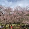 桜と枇杷、選挙そしてクリスマスの画像