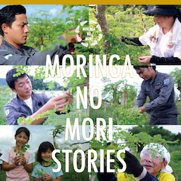 画像 デザートに生葉を使いたい 人と自然に優しい糸満市産モリンガとは(沖縄県) の記事より 10つ目