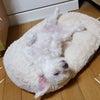 警戒心のない犬猫達いろんなご縁❤ private blog.60の画像