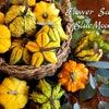 10月の花材の画像