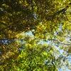 10/25黄葉の森トレッキング相乗り参加者募集中、10/31ハロウィン仮装トレッキング妄想企画の画像