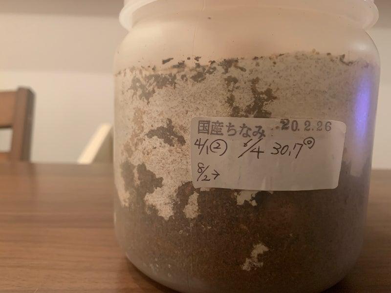 交換 菌糸 ビン 冬の菌糸ビン交換について