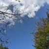 芝生の上に寝転がって空を見上げた〜大山崎山荘美術館の庭①〜の画像