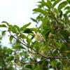 秋の香りのルームフレグランスの画像