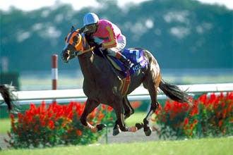 21世紀最初の秋華賞馬<2001年秋華賞勝ち馬テイエムオーシャン ...