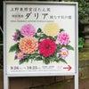 上野のダリア展の画像