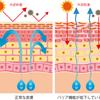 秋の乾燥肌を防ぐ!ターンオーバーについての画像