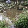 渓声広長舌。水音が恋しい時に~大山崎山荘美術館の庭②~の画像