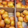 今年は柿が美味しいって本当!?の画像